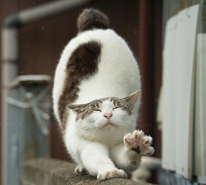 gato-de-rua-imagem-9