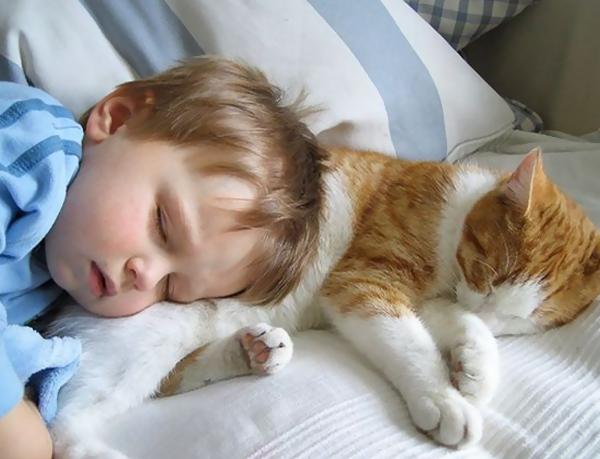Resultado de imagem para gatos adoram dormir por cima de seus donos