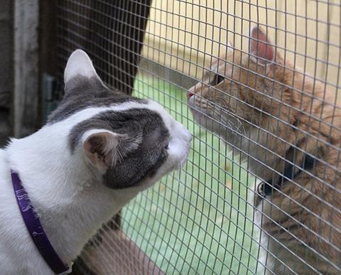Introduzindo um novo gato na casa - CAT CLUB b0e348e58b