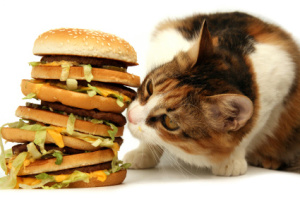 cat-eating-big-mac1