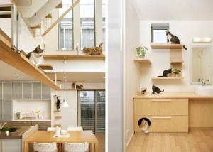 japancathouse