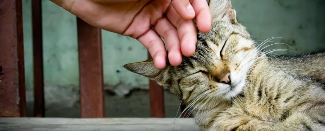 Resultado de imagem para terapeutic cat