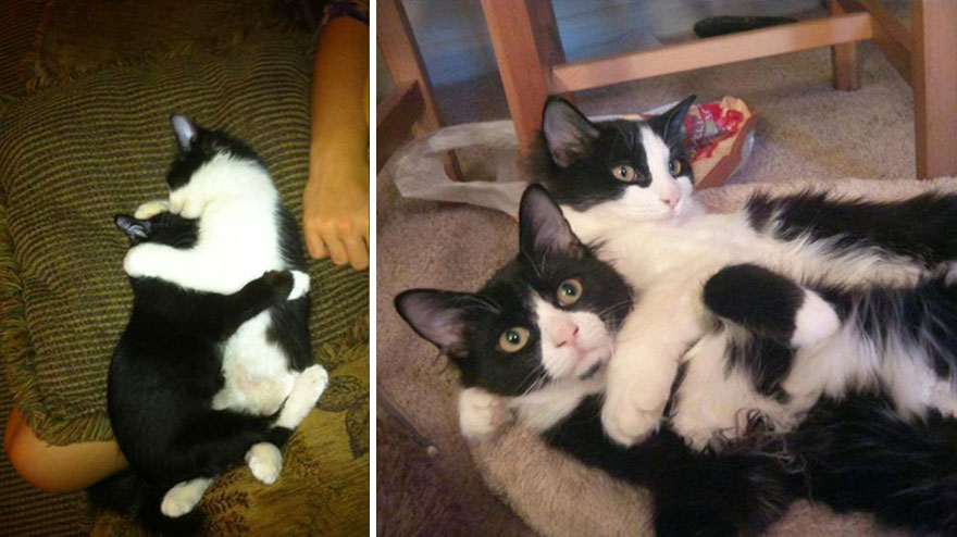 before-and-after-growing-up-cats-29__880