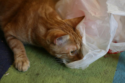 cat-licking-plastic-bag