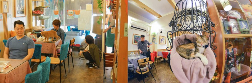 Cat Flower Cafe em Taiwan. Fonte: munchies.vice.com