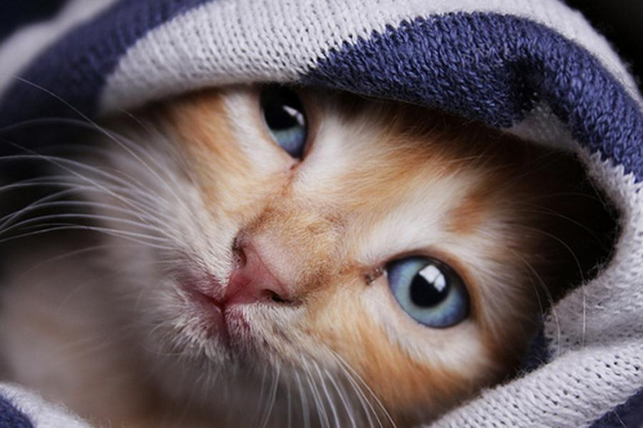 Tem Na Web - 10 sinais de revelam o quanto seu gatinho é apaixonado por você!!!